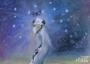 Rup en de vreemde vogel_9