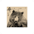 Bear of the Day Berenboek 2_5